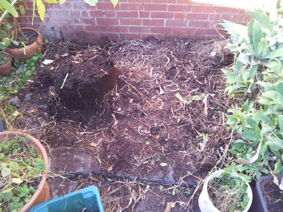 Luckily for me, there was a pile of good, rotted compost right where I wanted to garden, so I just kicked over the pile and spread it around.